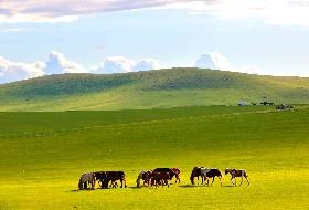 金色的国度呼伦贝尔大草原双飞6日游 南昌到内蒙古旅游