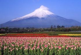 日本双古都双温泉希尔顿之旅6日(富士山、奈良、京都、东京)  编号:386