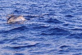 暑期台湾赏鲸纯玩深度8日游(台北进出)