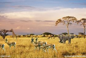 爵士南非 追逐动物10天之旅